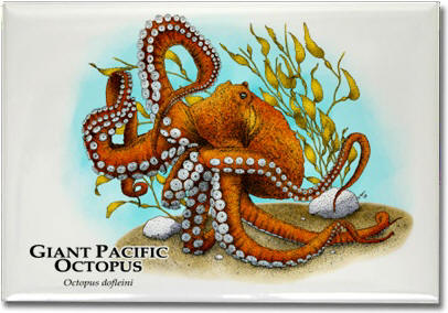 giant_pacific_octopus